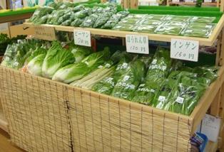 野菜の日です1