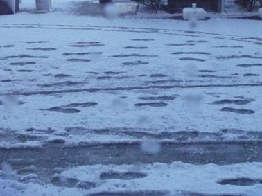 雪景色です1
